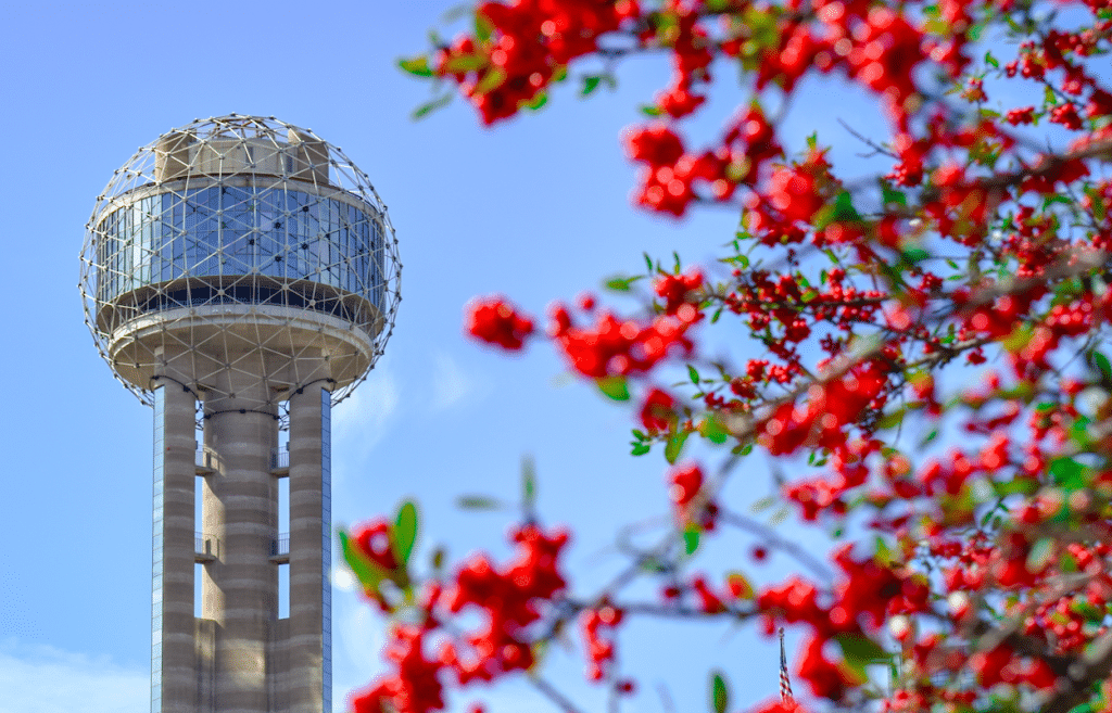 53 Magnificent Things To Do In Dallas In March