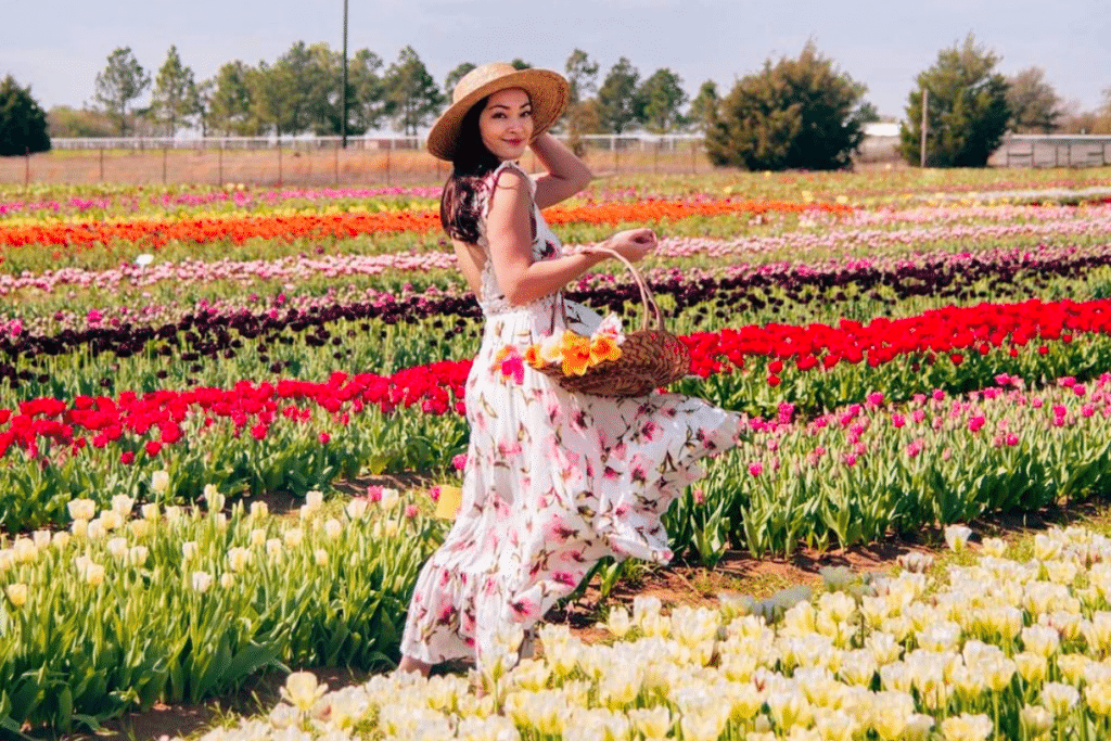 Overflow Your Basket With The Most Dazzling Tulips From This Brilliant Tulip Field Just Outside Dallas